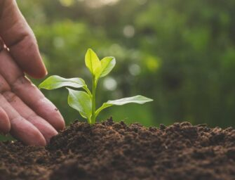 El Maga busca fortalecer agricultura en el país
